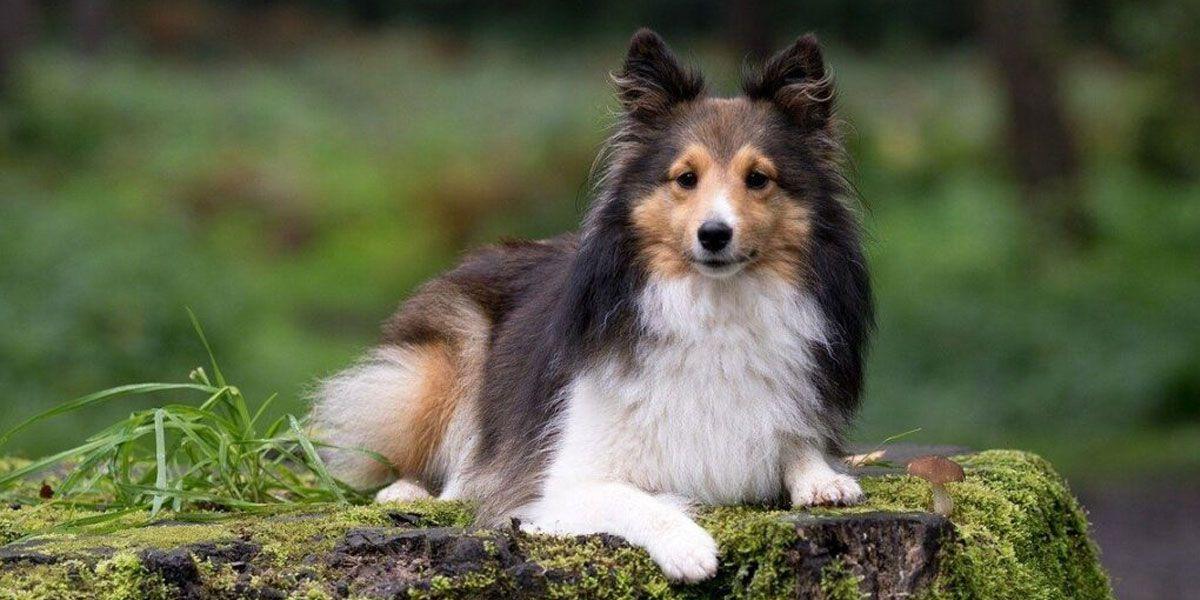 Un estudio reveló las 10 razas de perros más inteligentes