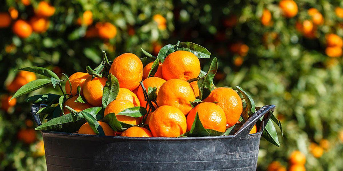Basta de moho: cómo evitar que se echen a perder las naranjas