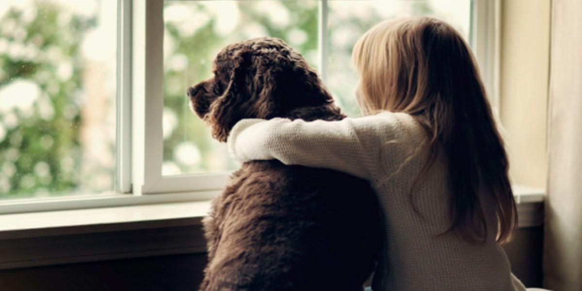Un estudio reveló que los perros pueden reconocer las emociones de sus dueños, incluso la tristeza